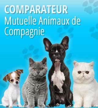 Comparateur Mutuelle Animaux de Compagnie
