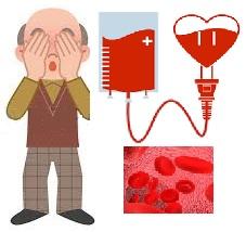 Santé des seniors: l'hématologie