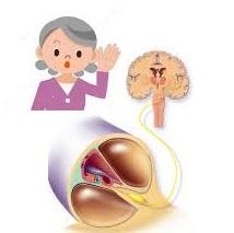 Santé des seniors après 50 ans: la presbyacousie
