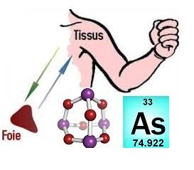 Mutuelle entreprise maladies professionnelles dues à l'arsenic et ses dérivés : cancer de la peau et du foie